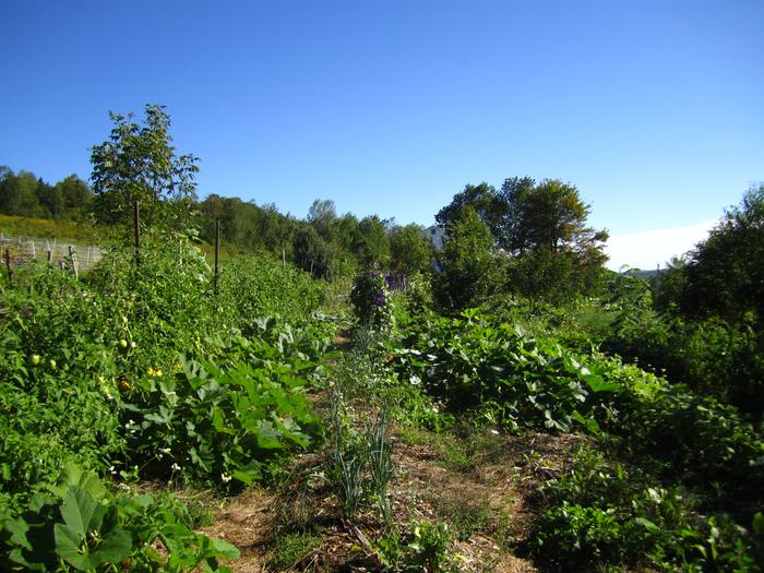 [Thumbnail for permaculture-food-forest-after.jpg]