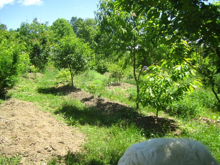 [Thumbnail for permaculture-food-forest-year-five.jpg]