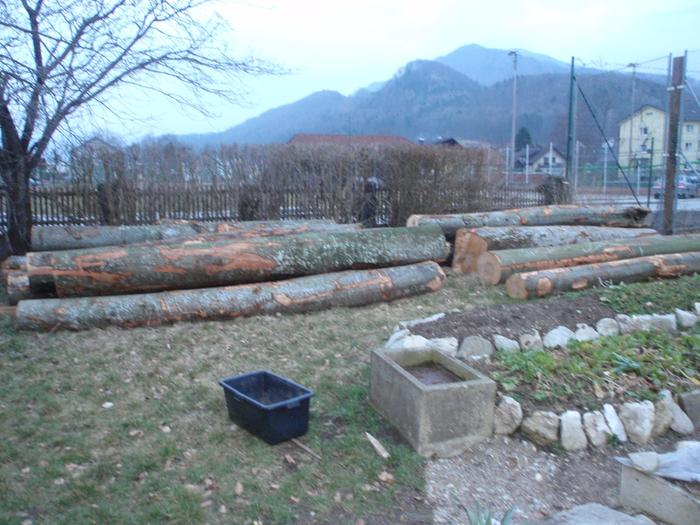 about 15 000kg of european beech and sycamore