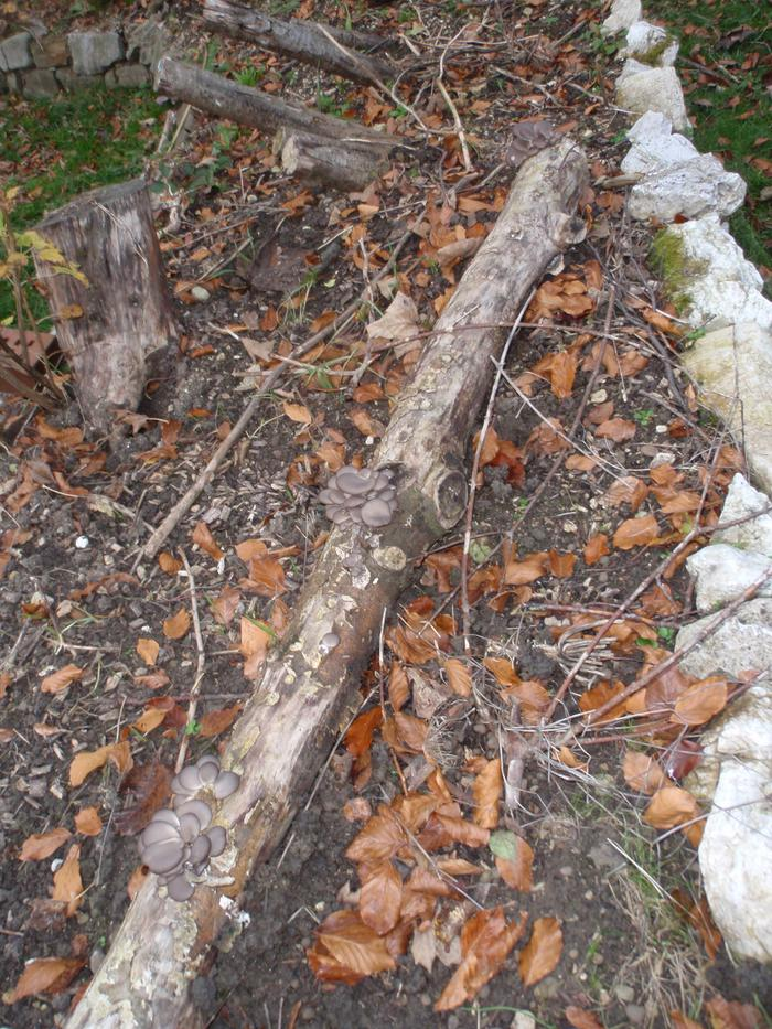 The small oyster log integrated in a huegel bed with good ground contact and full midda sun