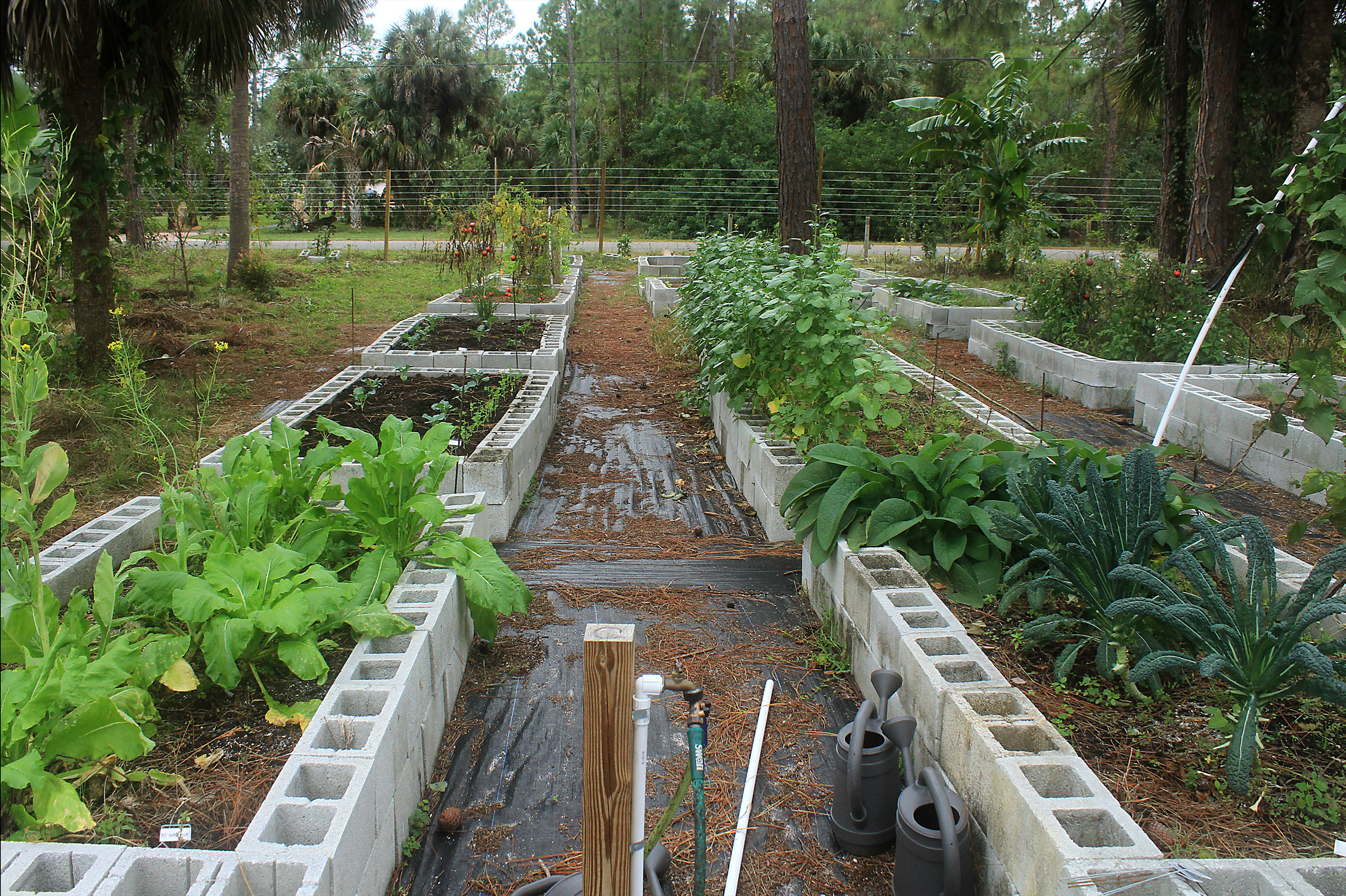 Food Forest Backyard : How to sell a Food Forest? (forest garden forum at permies)