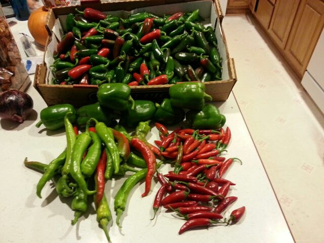 Home grown peppers