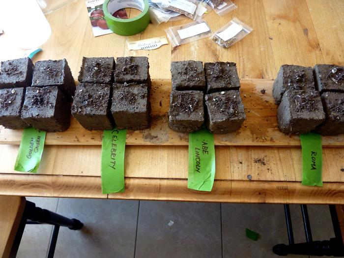 Planting seeds in soil blocks