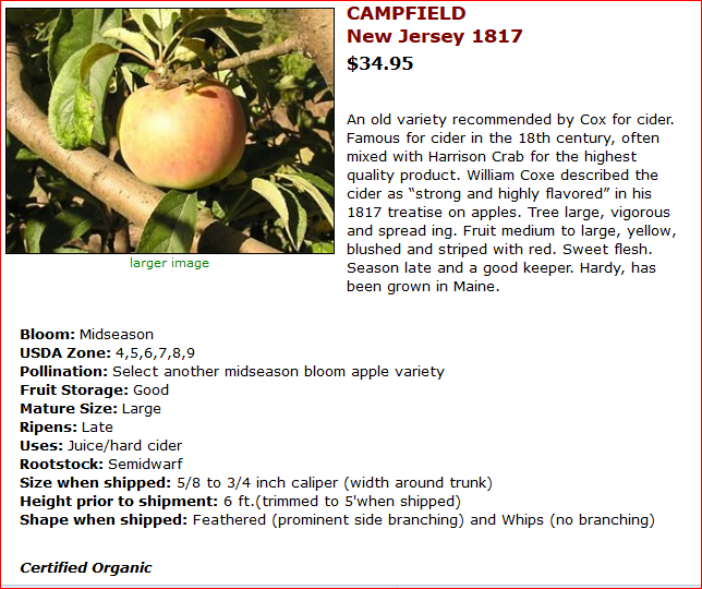[Thumbnail for APPLE - Campfield.PNG]