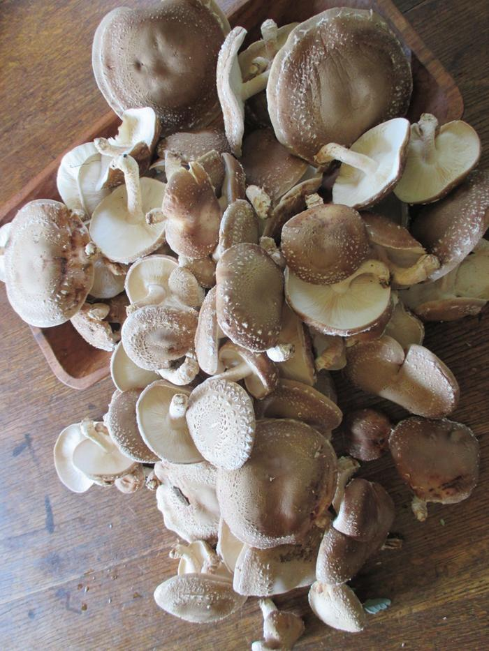 handfuls of shiitakes
