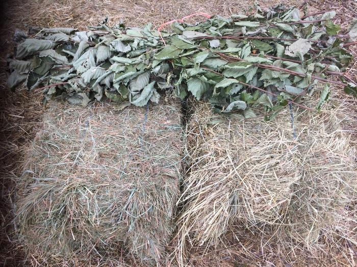 comparing Elm hay to 1st and 2nd cut hay