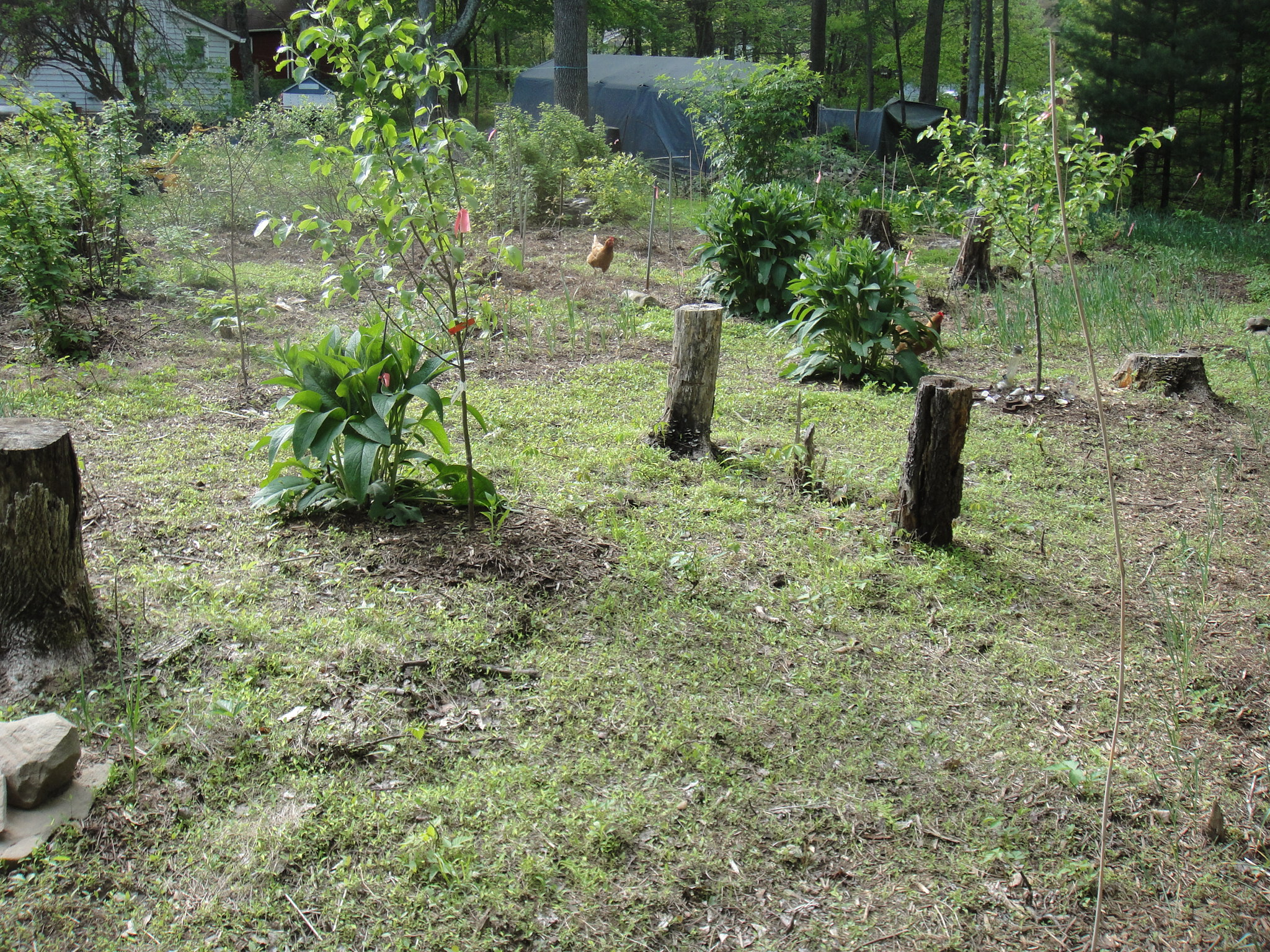 permaculture as a basis for a The permaculture garden is a lot more than an organic garden intelligent design uses free, sustainable energies and resources it is energy-wise and collaborative to minimise the impact of.