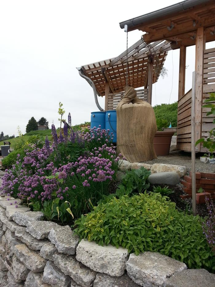 [Thumbnail for bff-community-area-perennials-water-catch.jpg]