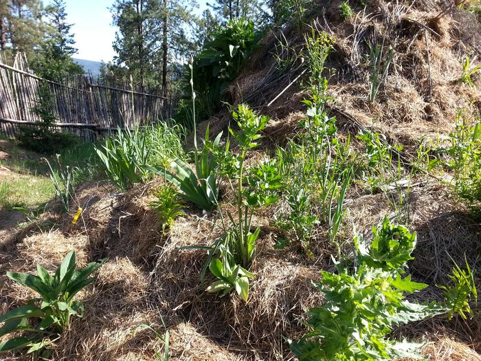 lovage and other growies