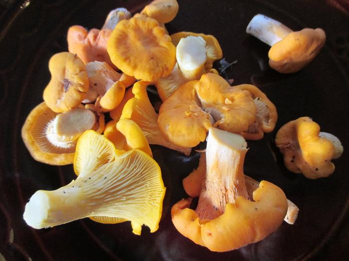 [Thumbnail for chanterelles-001.jpg]