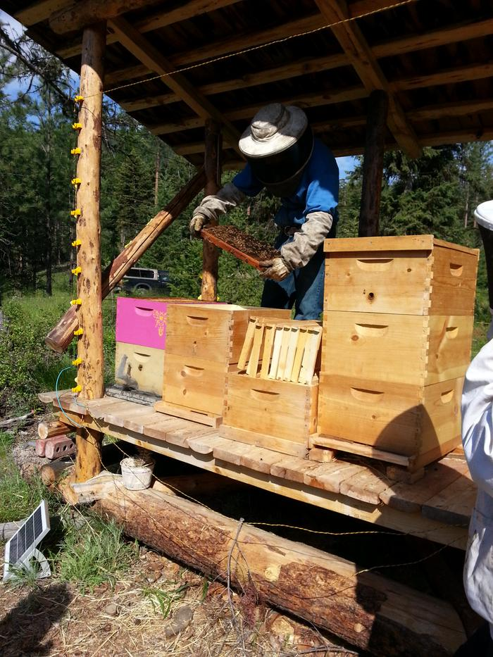 [Thumbnail for bees-Jacob-new-colony-20160518_095416.jpg]