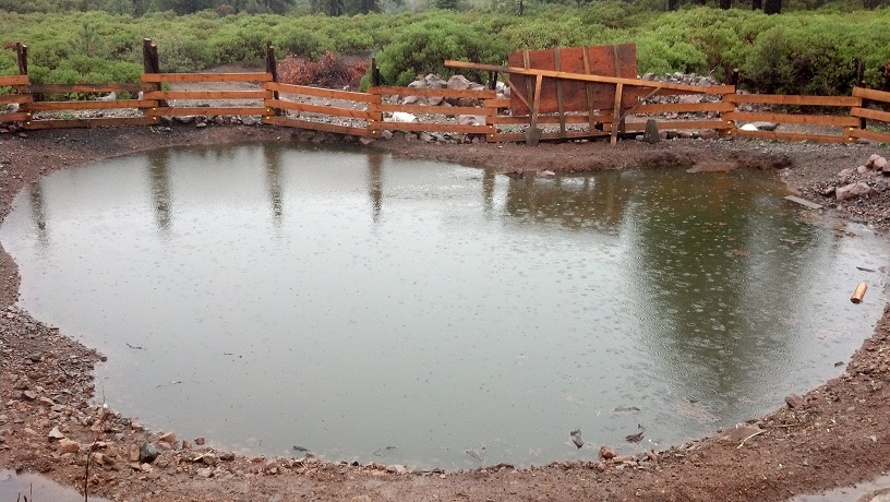 My Progress Gleying a Pond With Pigs (ponds forum at permies)