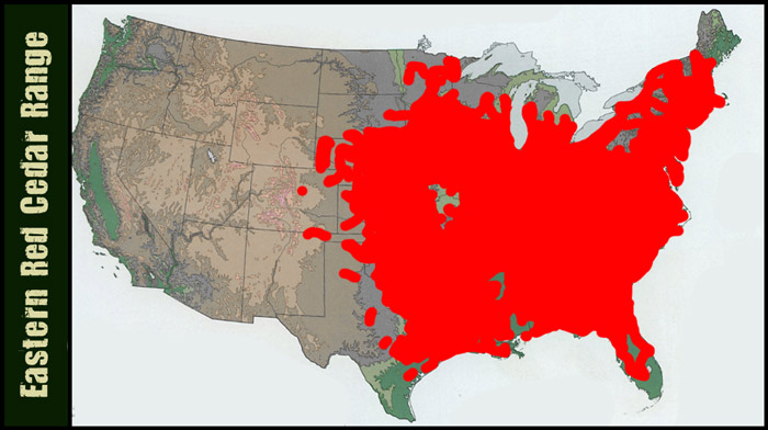 [Thumbnail for Eastern-Red-Cedar-map700.jpg]