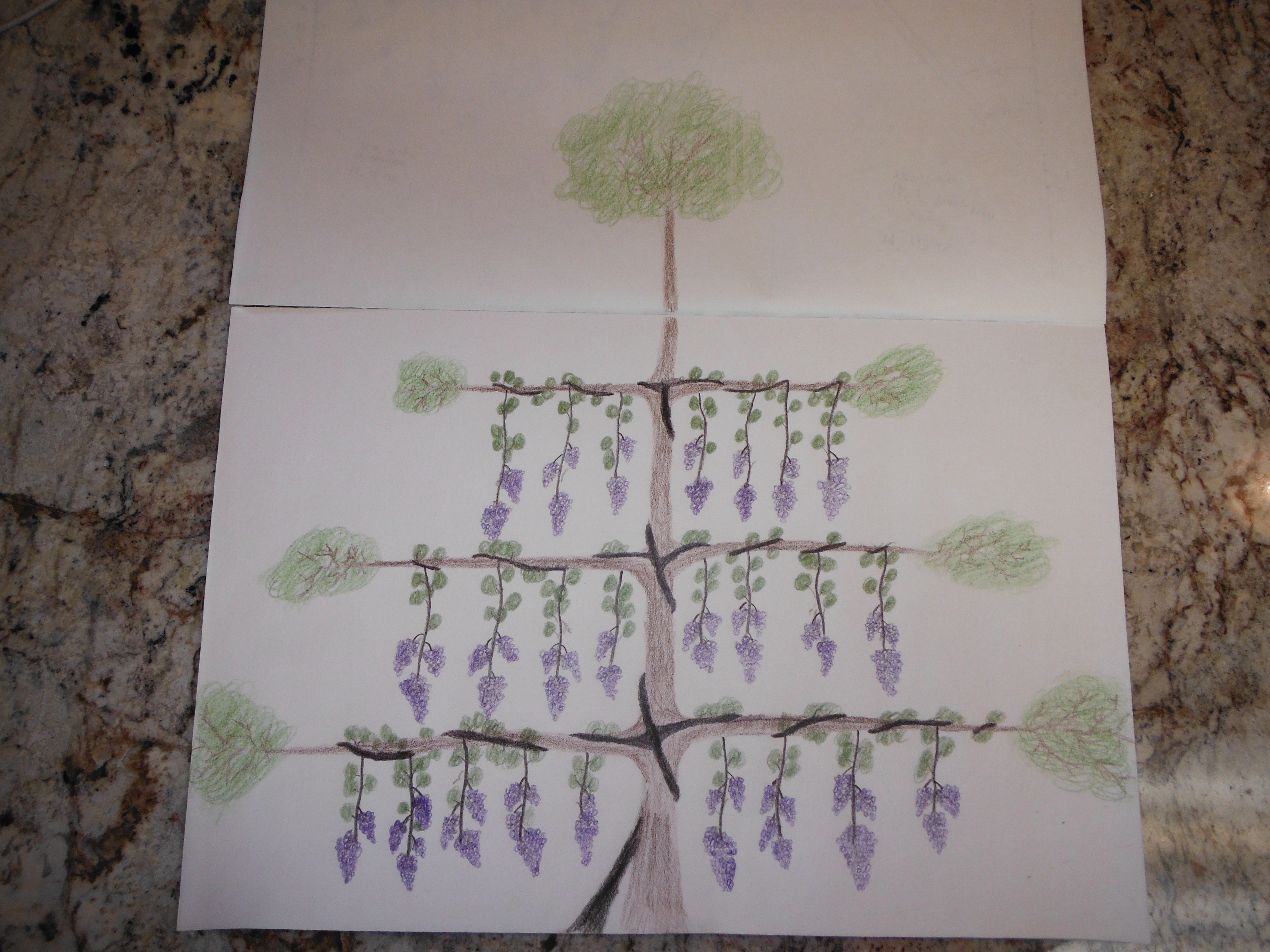 Using living trees as a trellis for growing vines (permaculture ...