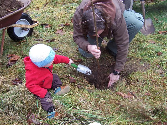 toddler and father planting an apple tree