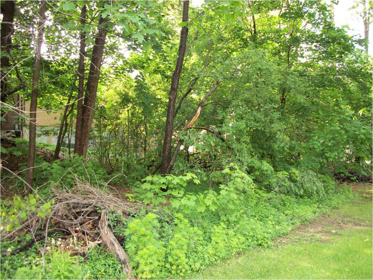 Converting existing forest to food forest permaculture forum at thumbnail for section of west sideg fandeluxe Gallery