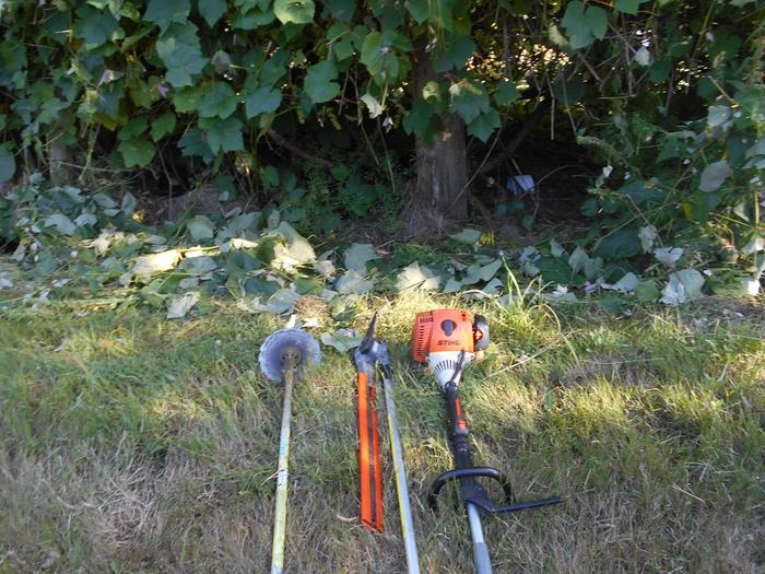Scythe blade, hedge trimmer, Stihl combi in front of trimmed grape arbor
