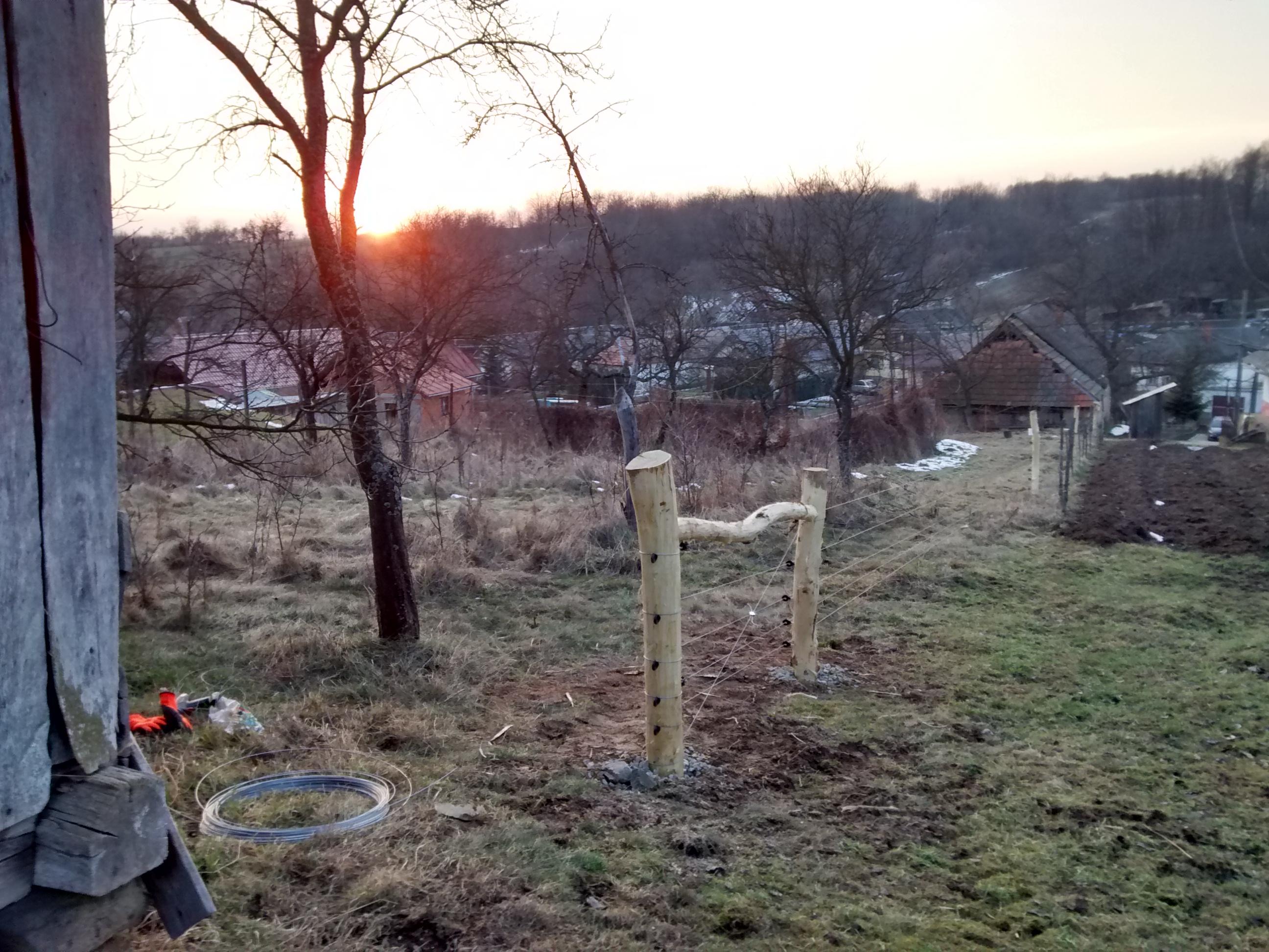 Black Locust fence posts (trees forum at permies)