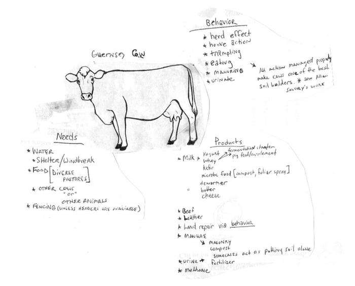 [Thumbnail for guernsey cow.jpg]