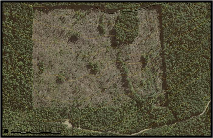 [Thumbnail for Greywood Basemap-11x17 1 to 2000.jpg]
