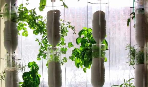 2010 Winter Hydroponic Window Farm Project Join Us