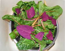 [Thumbnail for red orach2.jpg]