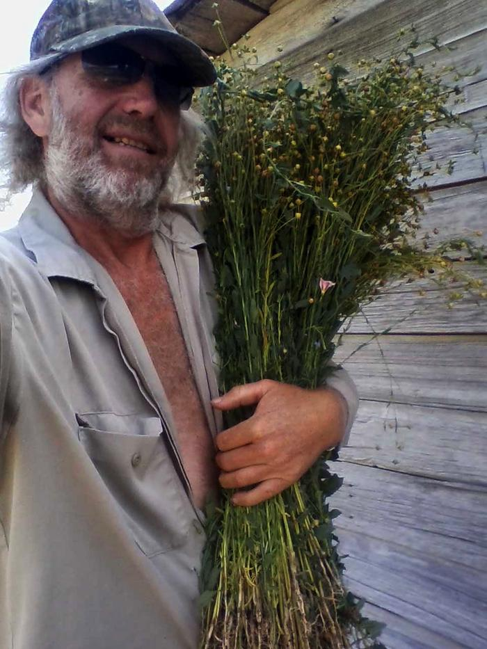 [Thumbnail for joseph-lofthouse-harvesting-fiber-flax.jpg]