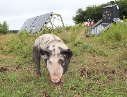[Thumbnail for IMG_1561.JPG-solar-pig.JPG]