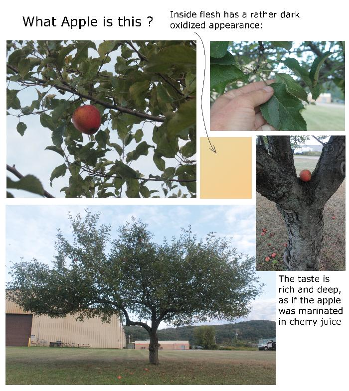 [Thumbnail for ID_Apple Tree.png]