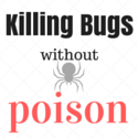 Diatomaceous earth - bug killer you can eat