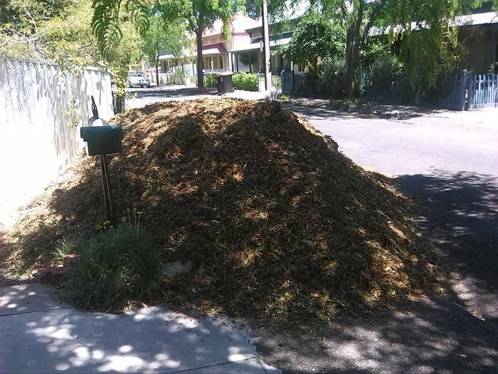 [Thumbnail for IMG_20150128-Mulch-Pile-01.jpg]