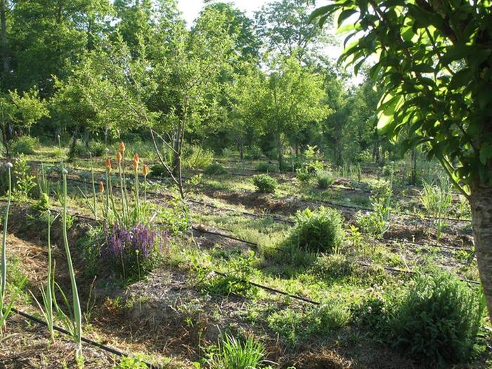 our orchard: apples, plums, pears, peaches as well as intense guilds