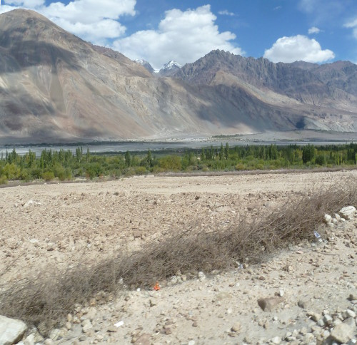 [Thumbnail for Newly laid thorn fence in Nubra.JPG]
