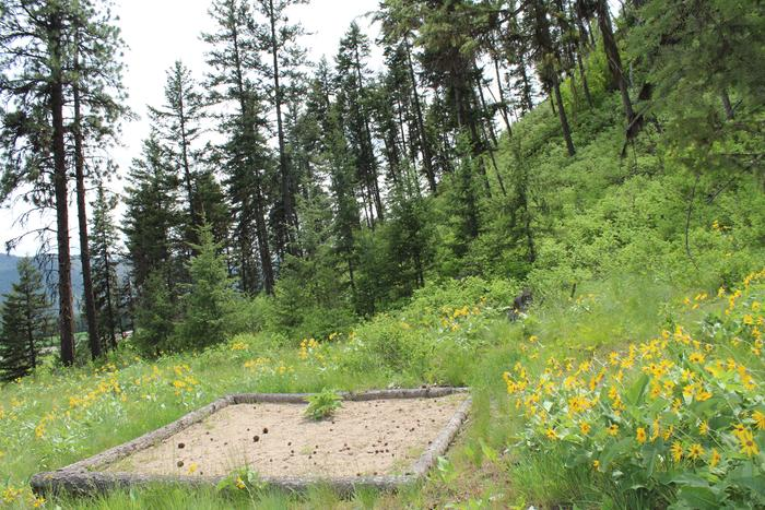 [Thumbnail for tent-site-camping-pad-camp-montana-wildlife-hike-vacation-permaculture.JPG]