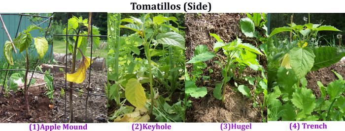 [Thumbnail for Tomatillos-(Side)-copy.jpg]