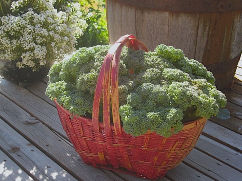 [Thumbnail for broccoli-in-basket.jpg]