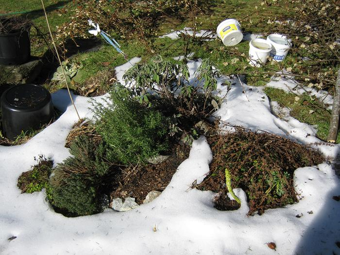 [Thumbnail for Feb22-permacultue-herbs-snow.jpg]