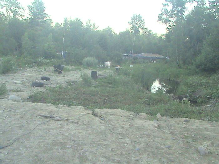 blueberry pond before
