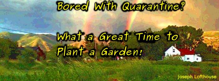bored with quarantine? Plant a garden.