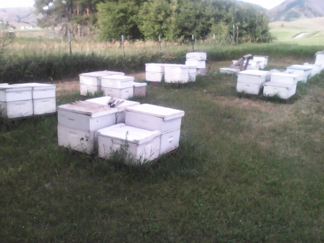 [Thumbnail for apiary-20180629_640.jpg]