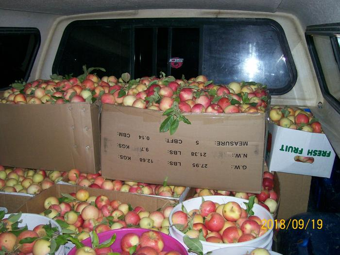 [Thumbnail for apples-truck.jpg]
