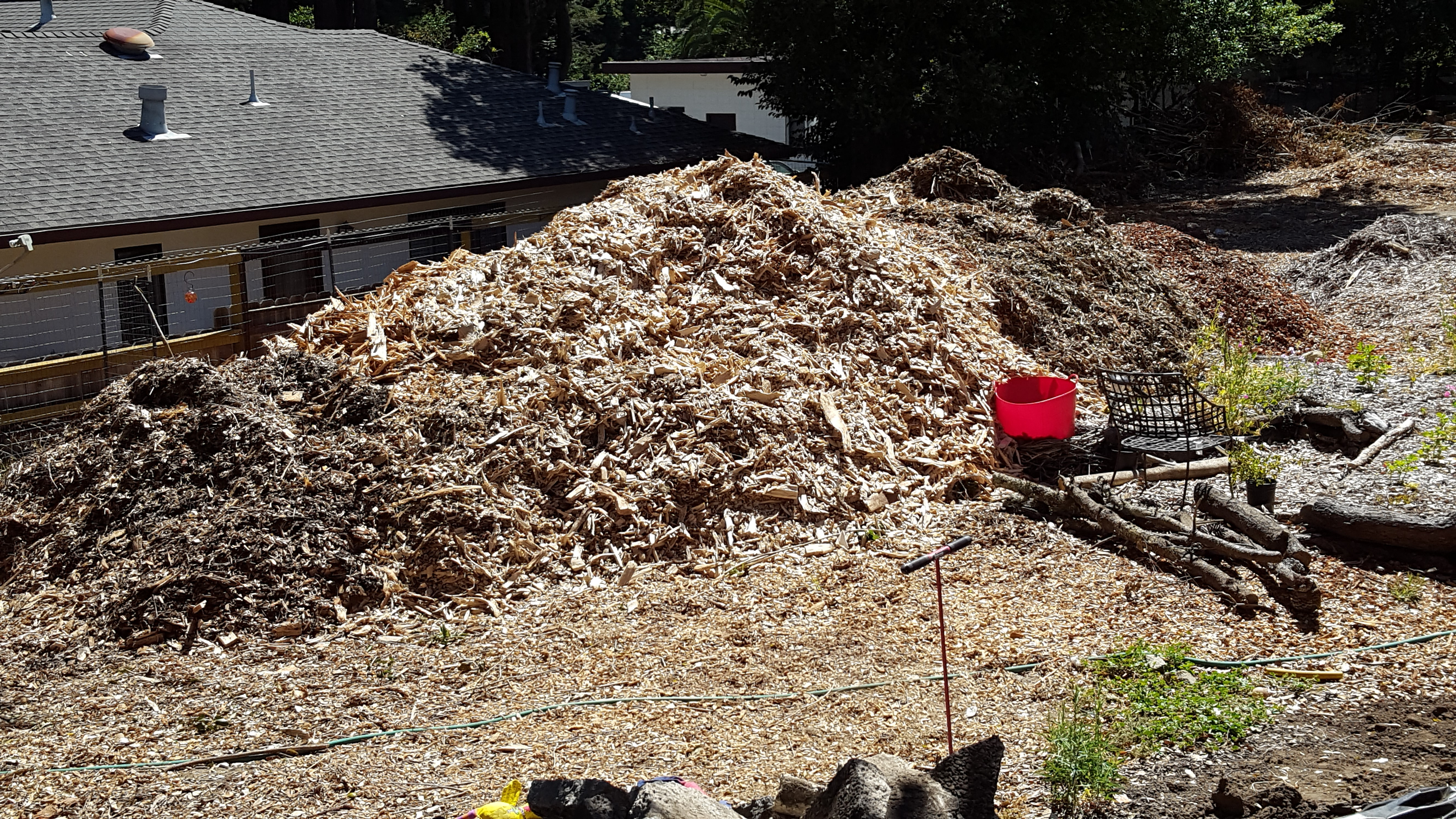 I'm just a girl who can't say no     to free wood chips (mulch forum