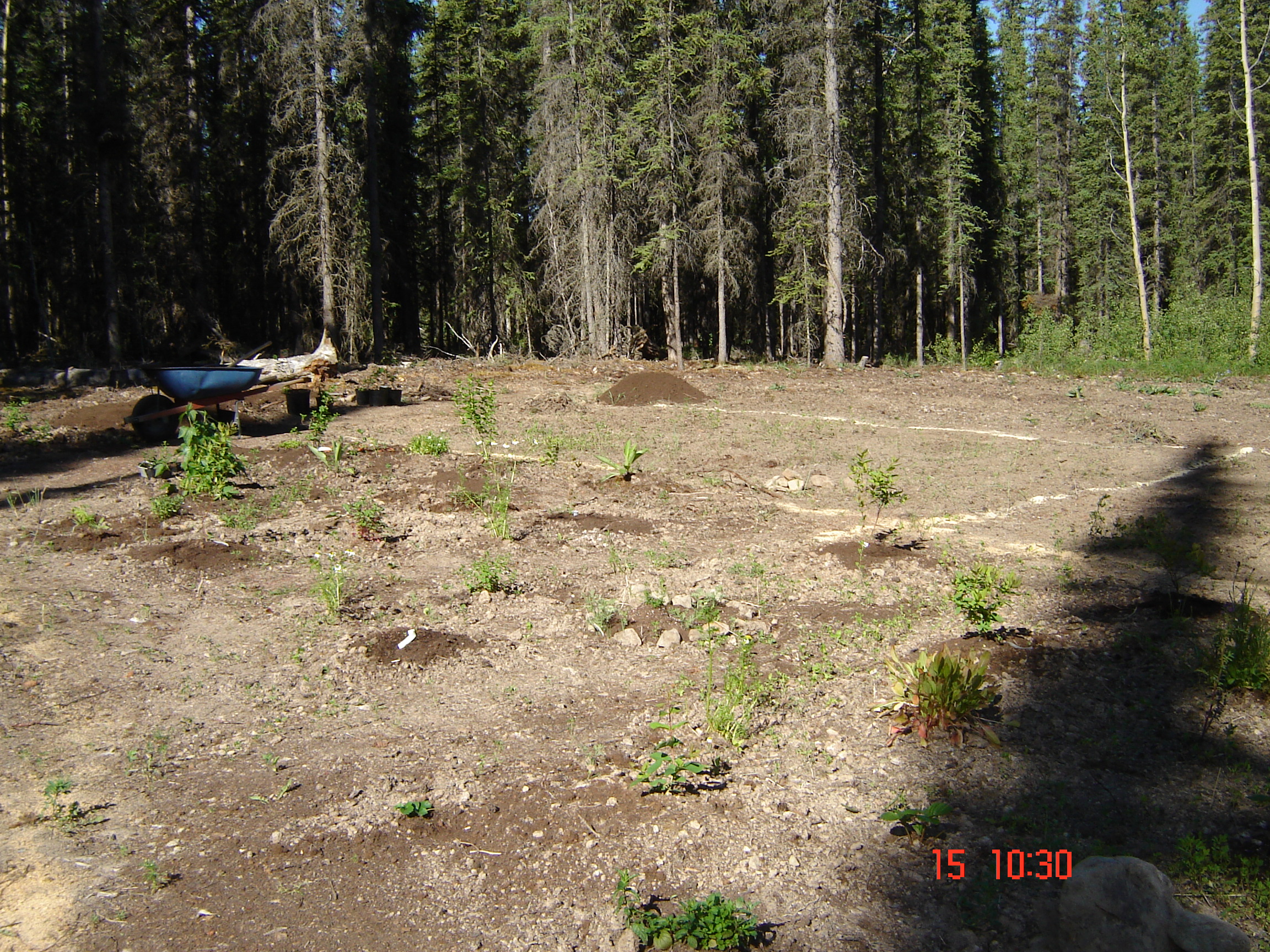 Hardiness Zone 2 Food Forests (great white north forum at permies)