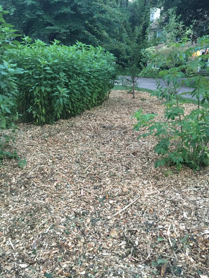 Sunchokes and woodchips