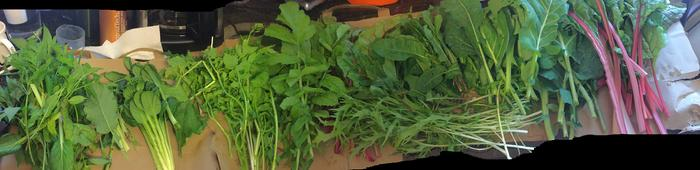 juicing my greens - so much diversity!