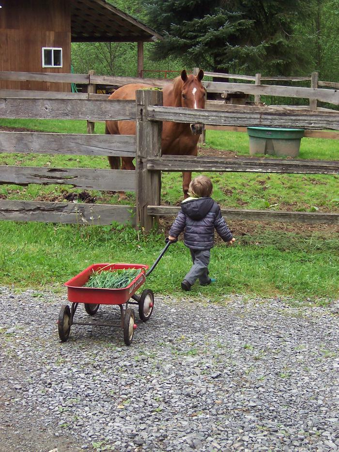 child pulling a wagon to a horse
