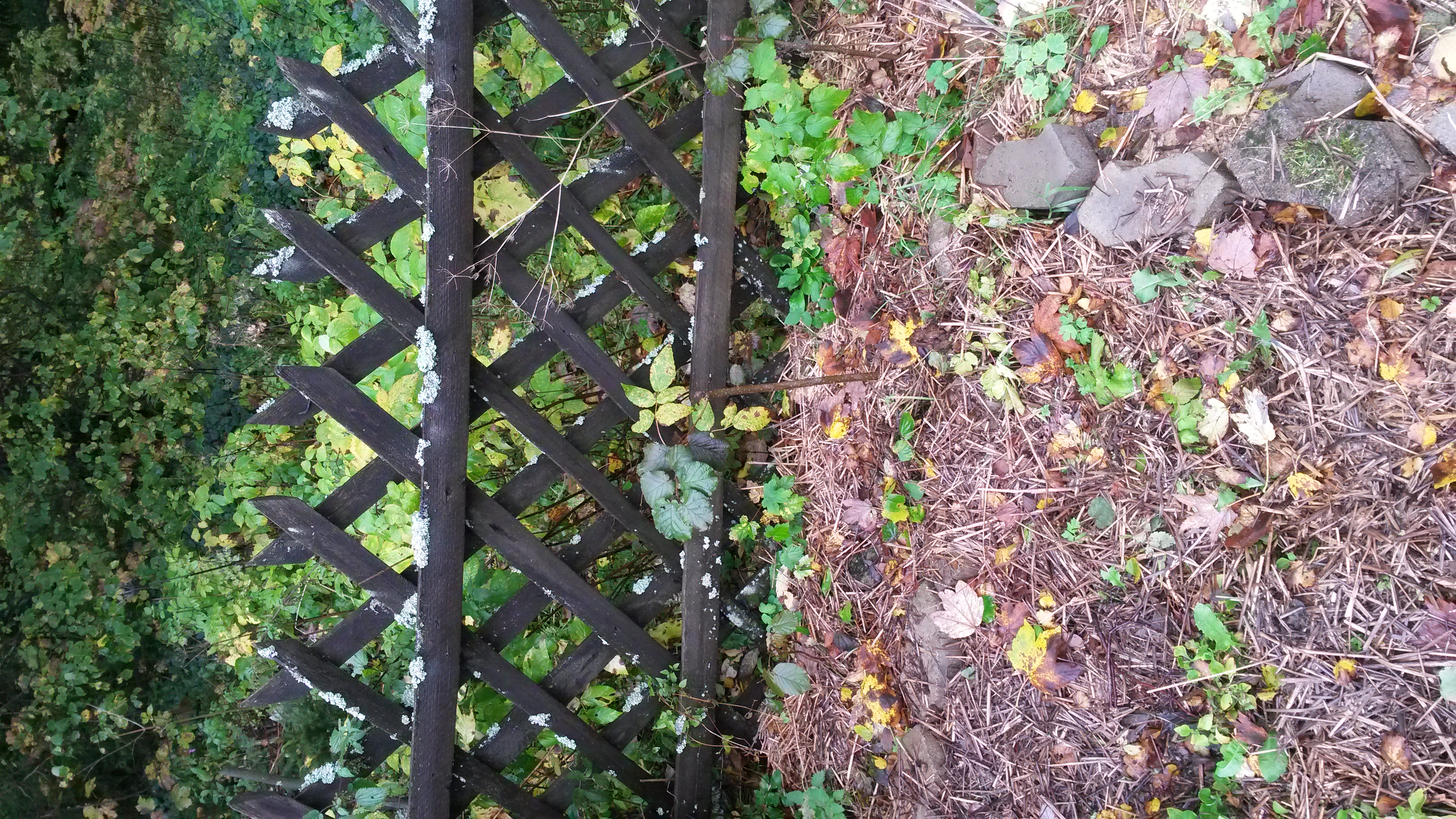 Help me design my living fence fencing forum at permies for Help me design my garden