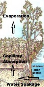[Thumbnail for Chinampas_capillary_diagram_MidwestPermaculture.com.jpg]