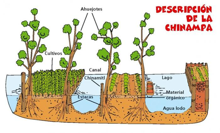 [Thumbnail for chinampas_diagram_amazonaws.com.jpg]