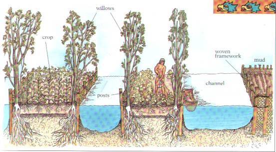 [Thumbnail for Chinampas_diagram_MidwestPermaculture.com.jpg]